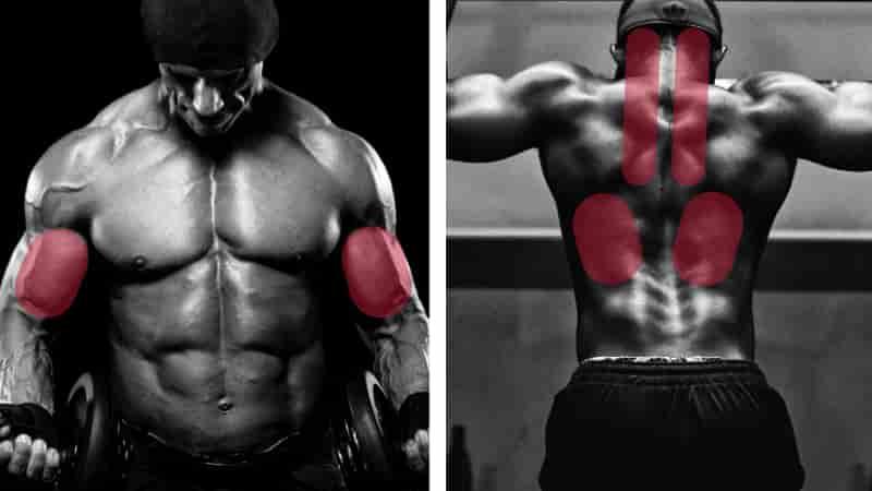 リバースチンニング懸垂で鍛えられる筋肉