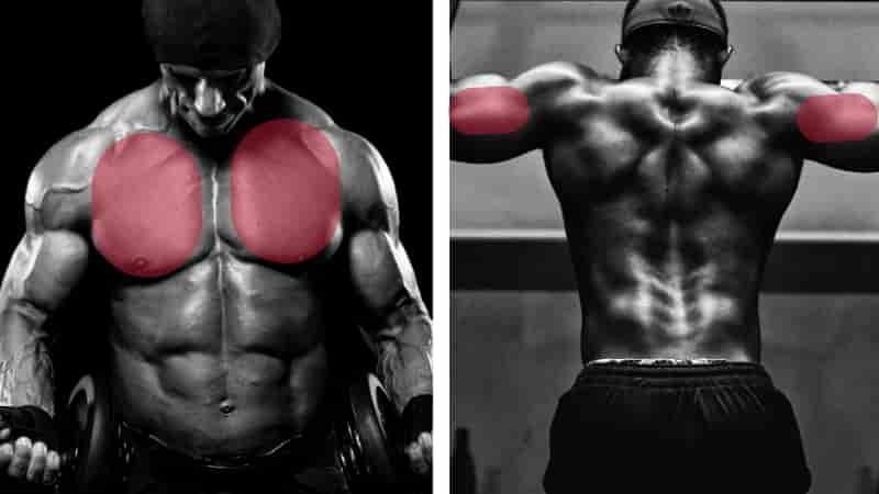 ディップスで鍛えられる筋肉